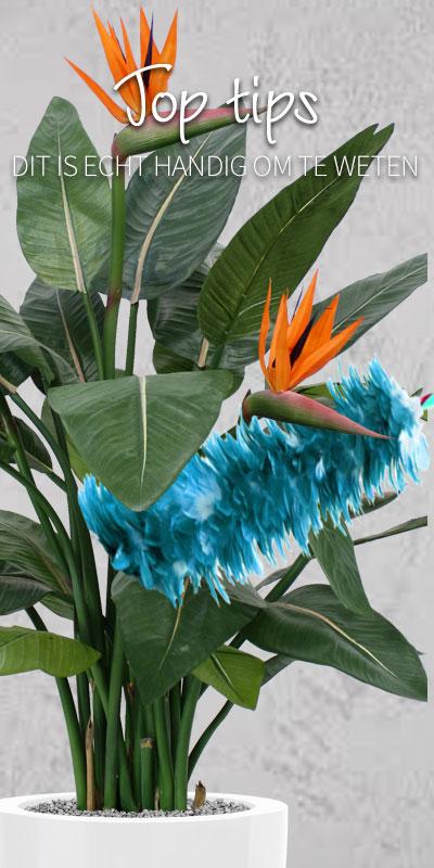 kunst hangplanten van Maxifleur